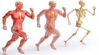 Schau was mit deinem Körper passiert, wenn du jeden Tag 5 min läufst!