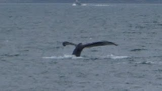 Alaska Cruise- Amazing Juneau- Whales Klondyke and Wyatt Earp -Alaska Cruise Holiday