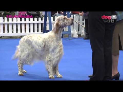 Manchester Dog Show 2017 - Gundog group FULL