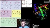 Biochemistry review - YouTube