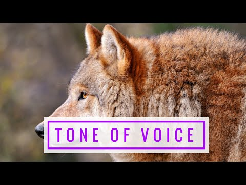 Tone Of Voice For Dog Training