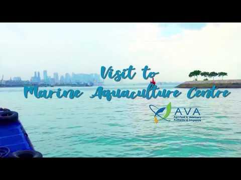 Visit to Marine Aquaculture Centre (AVA), St John Island, Singapore