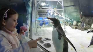 Смешное видео с пингвинами - Новая Зеландия / Very Funny video with Pinguins