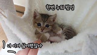 처음 캣타워를 선물 받은 아기 고양이 반응은?