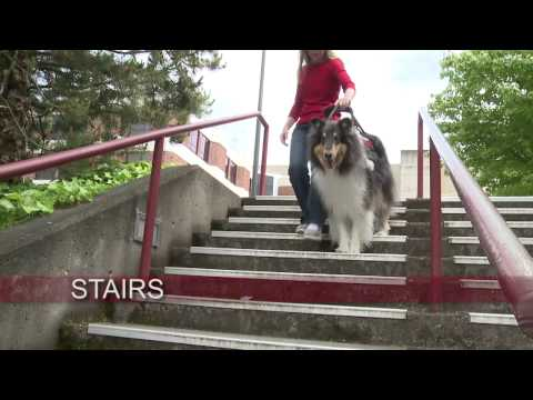 Collies for Mobility and Support Assistance