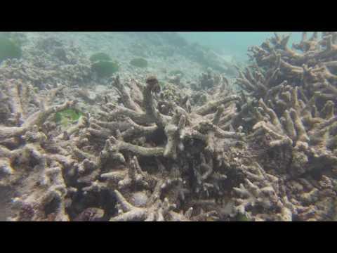 Snorkeling a Praslin - Seychelles