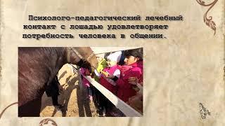 О пользе общения с лошадью