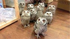 Owl - A Funny Owls And Cute Owls Compilation    NEW