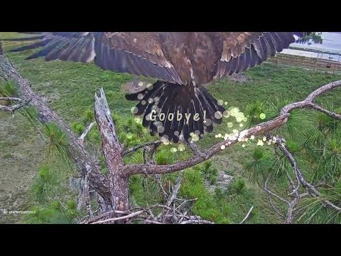 SWFL Eagles. ~ The Last Flight. E12's Way To Say Goodbye!