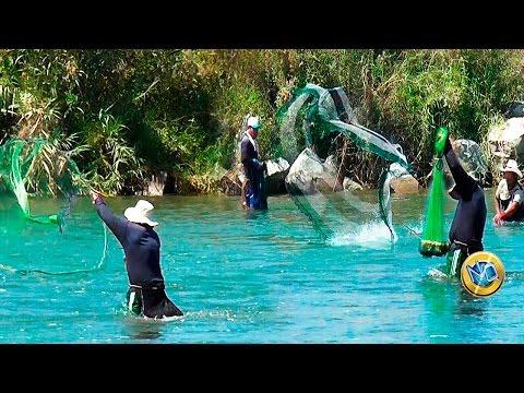 ASI SE PESCA CON RED EN EL RIO ✔  Taking shrimp from river