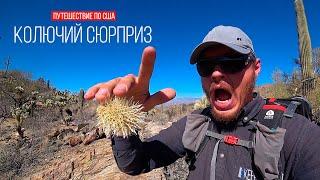 Мир гигантских кактусов   Парк Сагуаро, штат Аризона   Путешествие по США   #14