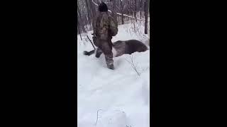 Охота на медведя на берлоги, медведь поймал собаку.