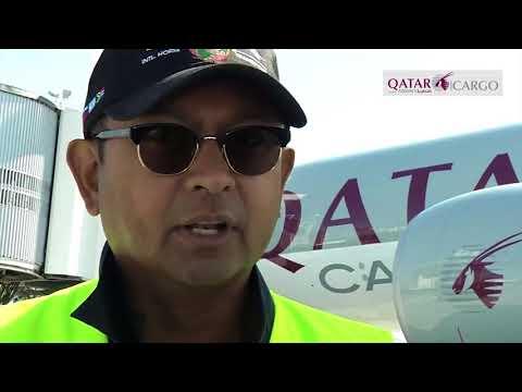 Horse cargo shuttle  by Qatar Airways cargo