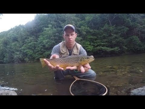 Battenkill Dry Fly Fishing - Freestone Wild Brown Trout