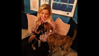 Baixar Kelly Clarkson  TV Special  Clear the Shelters