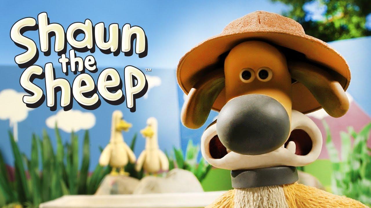 Zebra Ducks of the Serengeti - Shaun the Sheep