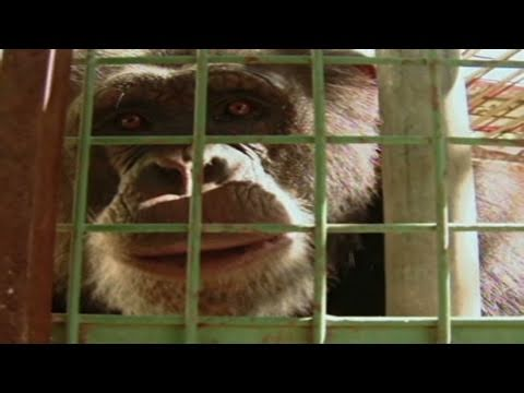 CNN: Fighting for animal rights