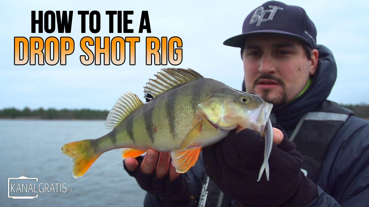 Drop-shot (rigging) - features of equipment and fishing 28
