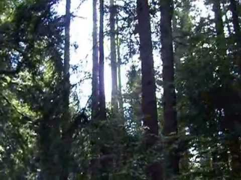 Century Old Steam Rail: A Ride through the Giant Redwoods - Roaring Camp to Bear Mountain