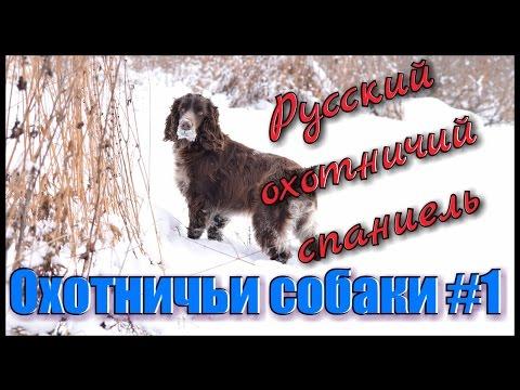 Русский спаниель Отзывы покупателей