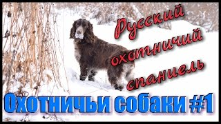 Охотничьи собаки #1. Охота с собаками. Русский охотничий спаниель. Hunting in Russia
