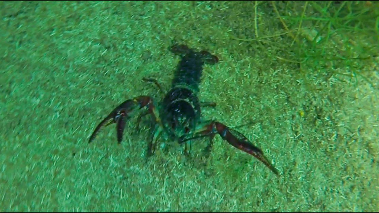 подводная охота #14 с прозраком