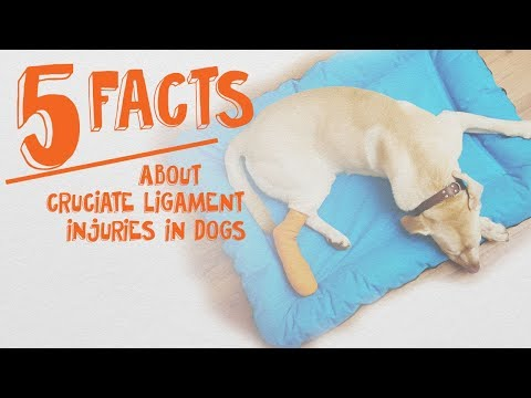 5 Things Dog Owners Need to Know About Cruciate Ligaments