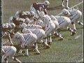 This Week in Pro Football 1970 Week 5