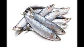 Top 15 Healthiest Fish to Eat For Enhancing Health