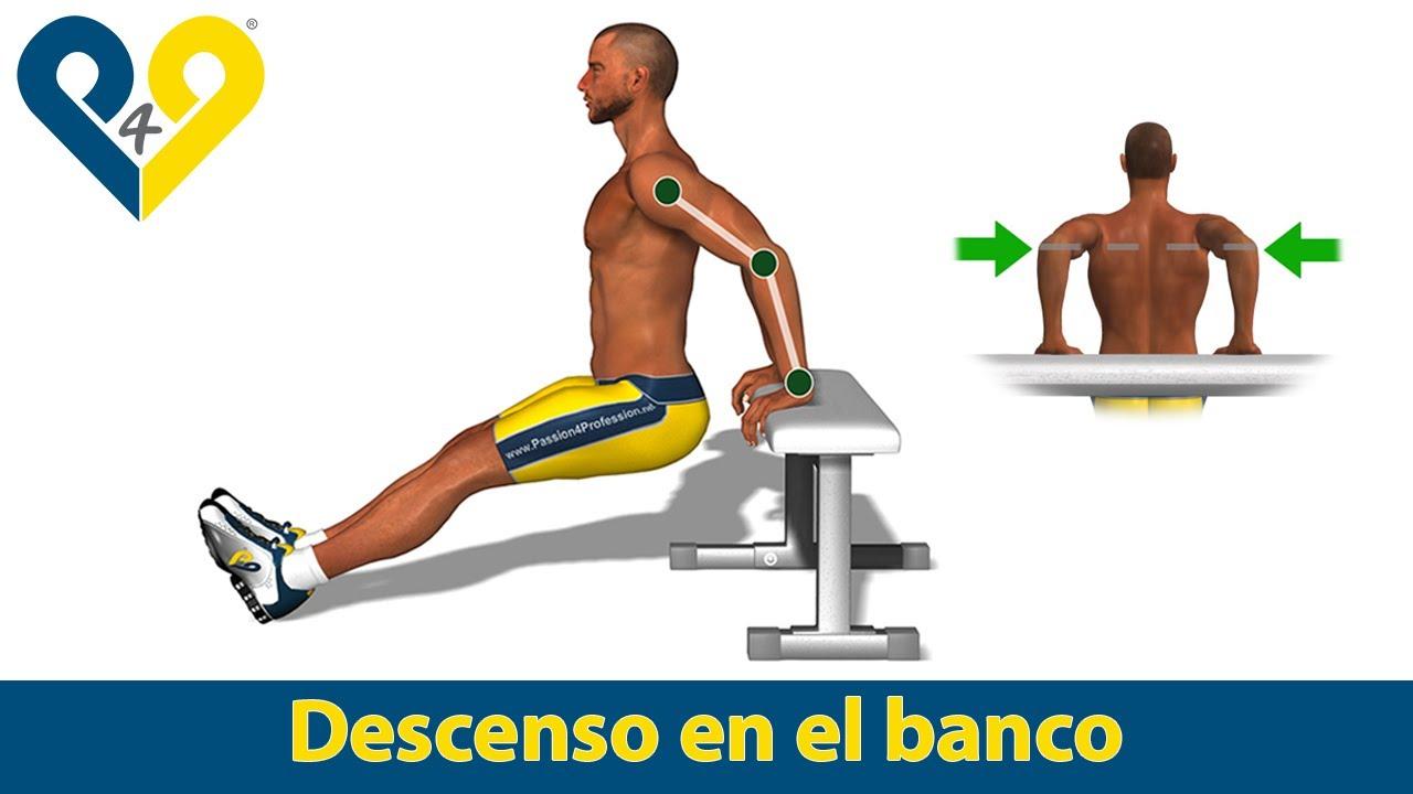 Cual es la funcion de los biceps y triceps