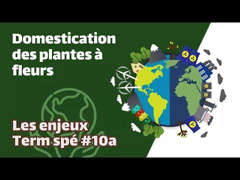 Domestication des Plantes #3 - SVT Terminales S - Mathrix