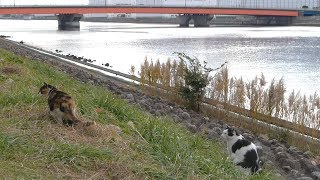 東京猫の日常生活 191 / The daily lives of cats in and around Tokyo thumbnail