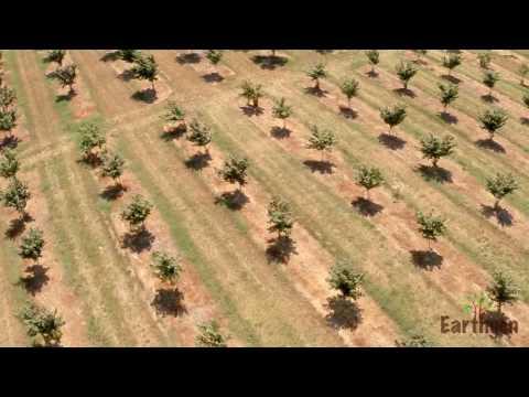 Example Of Mature Hazelnut Field - Earthgen