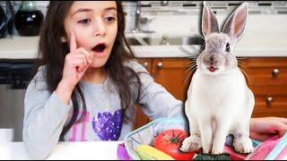العاب مطبخ اطفال العاب طبخ نتظاهر اللعب Heidi & Zidane قصص الأسرة