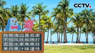 [智慧树]道哥和摩尔:椰子树|CCTV少儿
