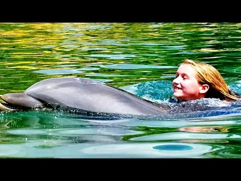 Swimming With Dolphins At Discovery Cove | Swim With Dolphins | Swim With Sharks