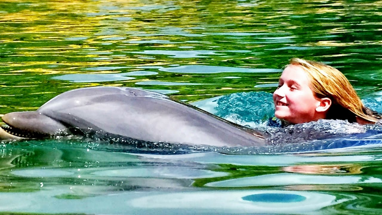 swimming with dolphins at discovery cove swim with dolphins swim