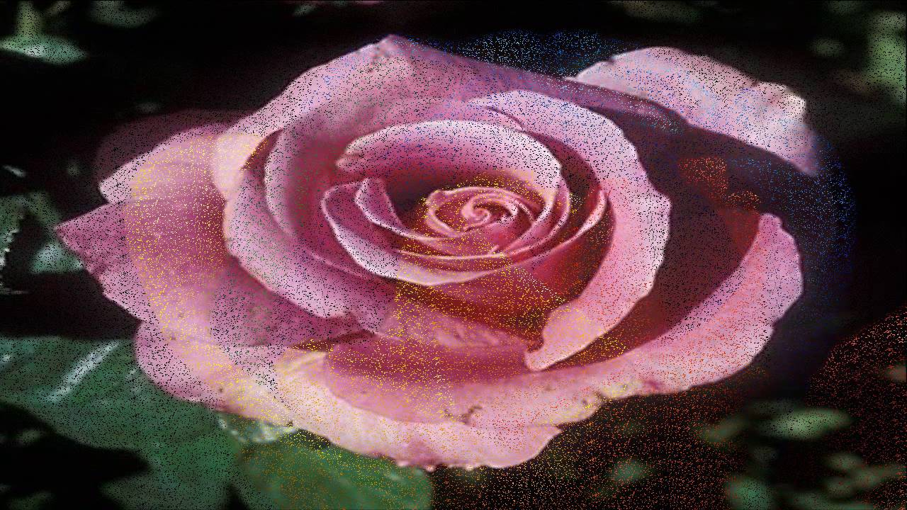 Types of rose flower