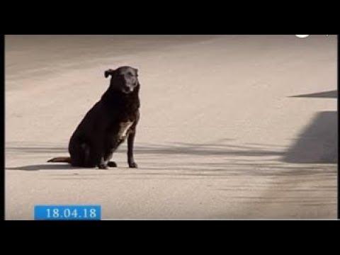 ТРК ВіККА: На черкаські торговельній базі знову, ймовірно, взялися труїти собак (ВІДЕО)