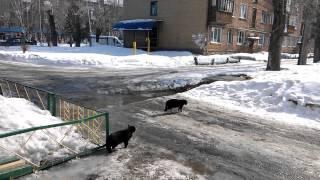 Мартовские коты-близнецы  разговорились перед подъездом