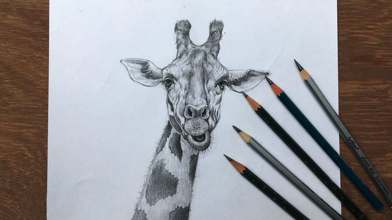Draw and shade a giraffe in pencil pencil sketch animals drawing