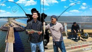 Câu Cá Và Nấu Ăn Ở Đảo Hàu ► bầm dập tại vịnh kho báu (Florida, Mỹ)