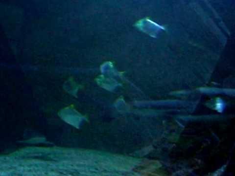 Underwater Scenes - YouTube