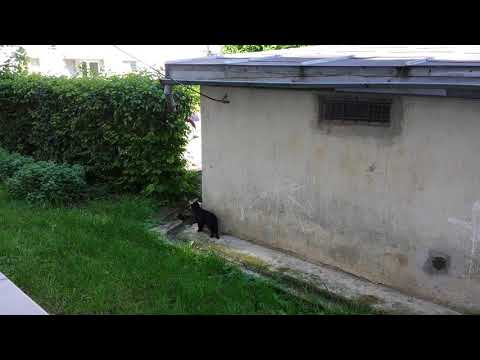 20140519 093934 Two cats hissing at each-other