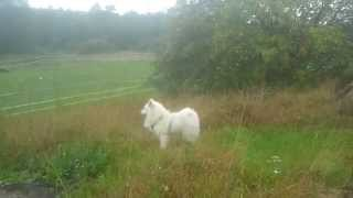 A Dog, A Horse, A Pony And An Electric Fence