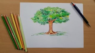 Tutorial - How to Draw a Tree and Color It using Pencil