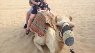 Ørken safari tur i Dubai - Juli 2016