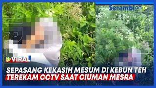 Viral Sepasang Kekasih Mesum Di Kebun Teh, Terekam CCTV Saat Ciuman Mesra
