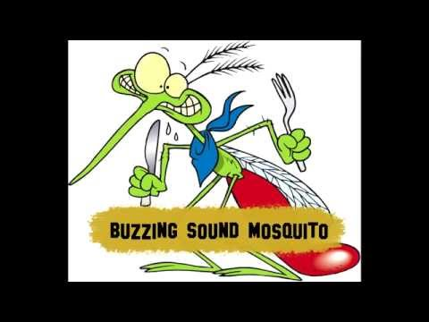 Mosquito fly (sound) - Copyright Free
