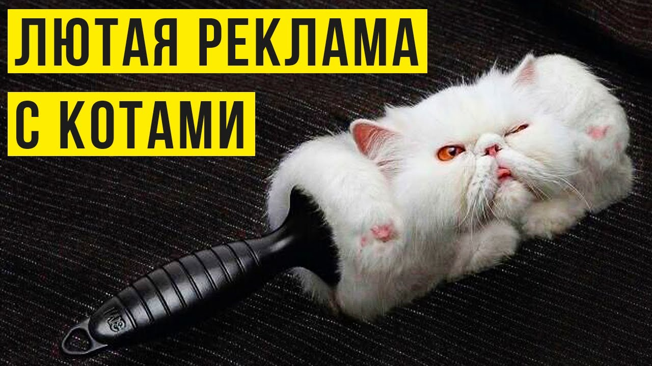Приколы с котами. Лютая реклама с котами)) | Мемозг #410